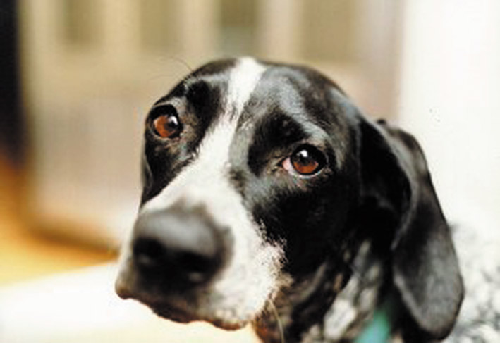 cane adulto taranto