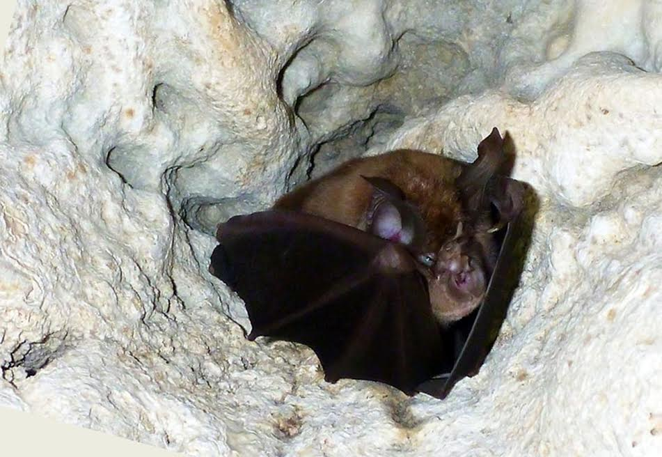 Pipistrelli nelle Gravine