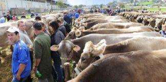 Mercato vacche Taranto