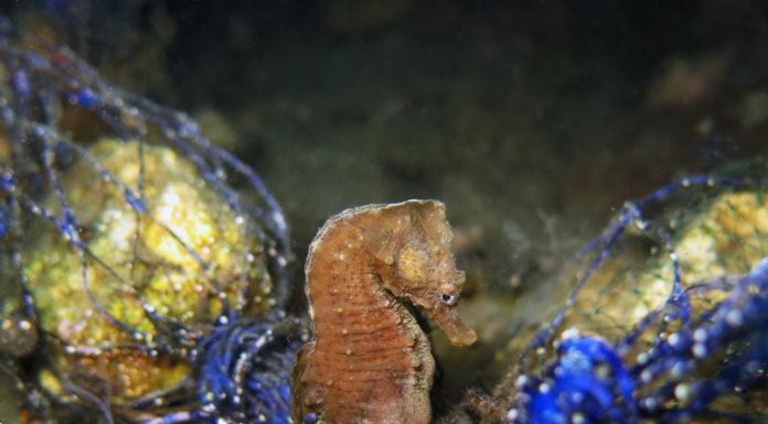 mar piccolo taranto